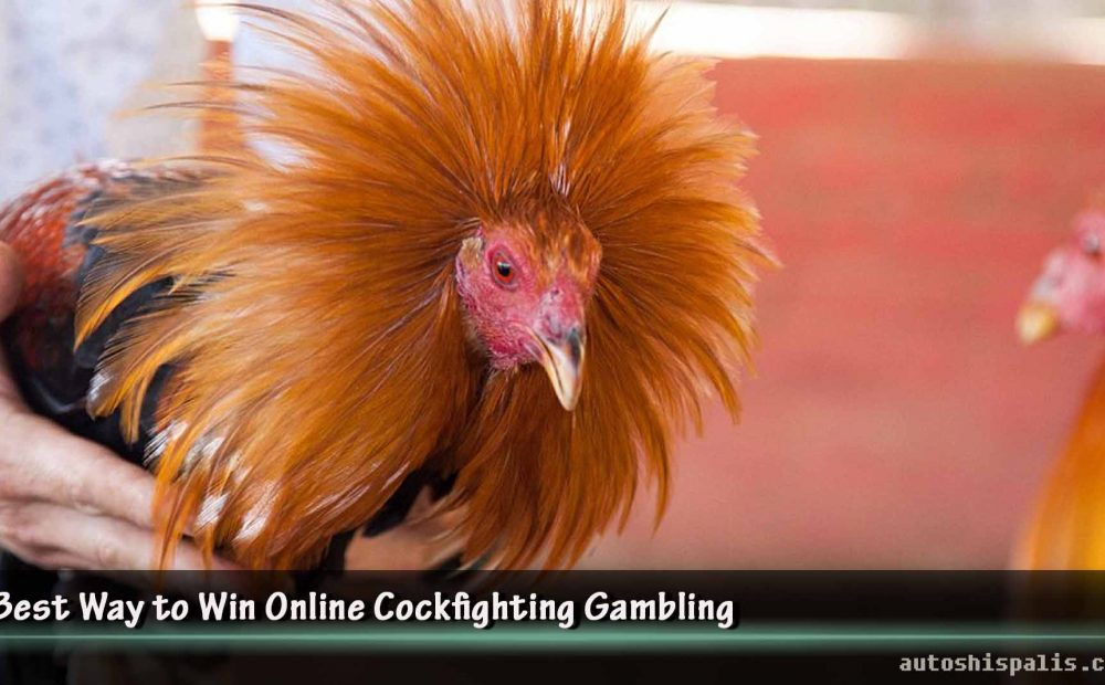Best Way to Win Online Cockfighting Gambling